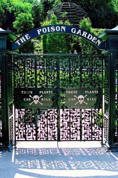 Poison Garden A Head Twirler At Alnwick Castle International