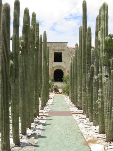 Jardin etnobotanico oaxaca mexico international travel for Jardin etnobotanico oaxaca