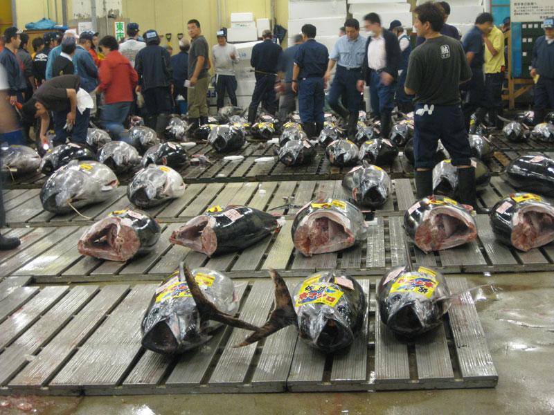 Tokyo s fish market international travel news for Japan fish market